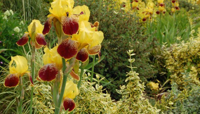Verborgen tuinen  van Nederland, Week van de Begraafplaats
