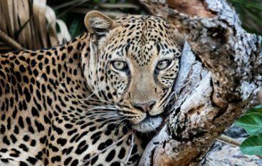Mukambi Safaris in Zambia