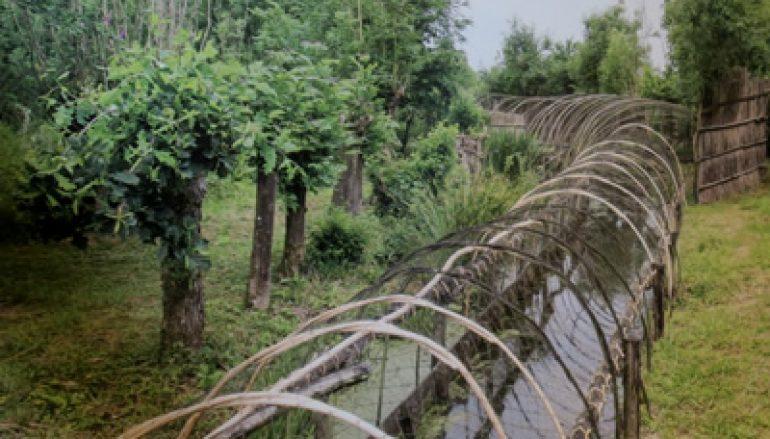 Fietsen langs Betuwse eendenkooien