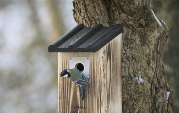 Een nestkast geeft  veel kijkplezier!