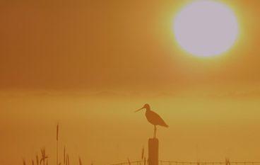 Texel: meest vogelrijke gemeente van Nederland