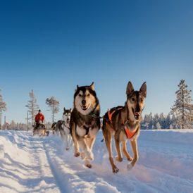Wintersport in hartje Scandinavië